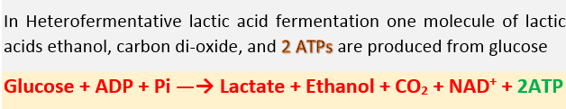 How Many ATPs are Produced in Fermentation, Lactic Acid Fermentation, and Alcohol Fermentation technology
