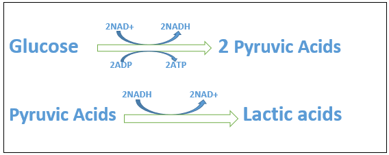 the equation of lactic acid fermentation