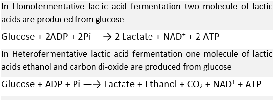 What are the Products of Lactic Acid Fermentation