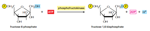 steps of glycolysis process
