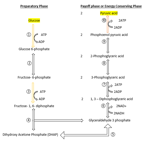 summary of glycolysis process